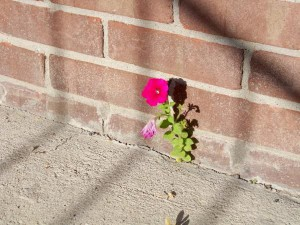Flower Crack Sidewalk